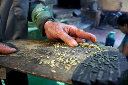 Đặc sản cốm làng Vòng Hà Nội - Người dân làng Vòng làm cốm cẩn thận và tỉ mỉ. Họ lọc bỏ những hạt hỏng, hạt lép.